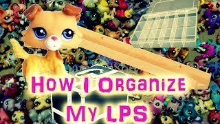 How I Organize My LPS & Accessories**Old**