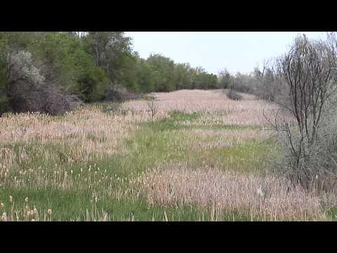 Wetland Preservation