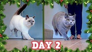 CATS PLAYING BALL & CHRISTMAS SHOPPING FAIL!   VLOGMAS DAY 2