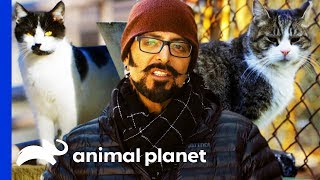 Jackson Galaxy Rescues A Community Of Stray Cats | My Cat From Hell