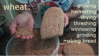 WHEAT - growing, harvesting, processing, and making bread