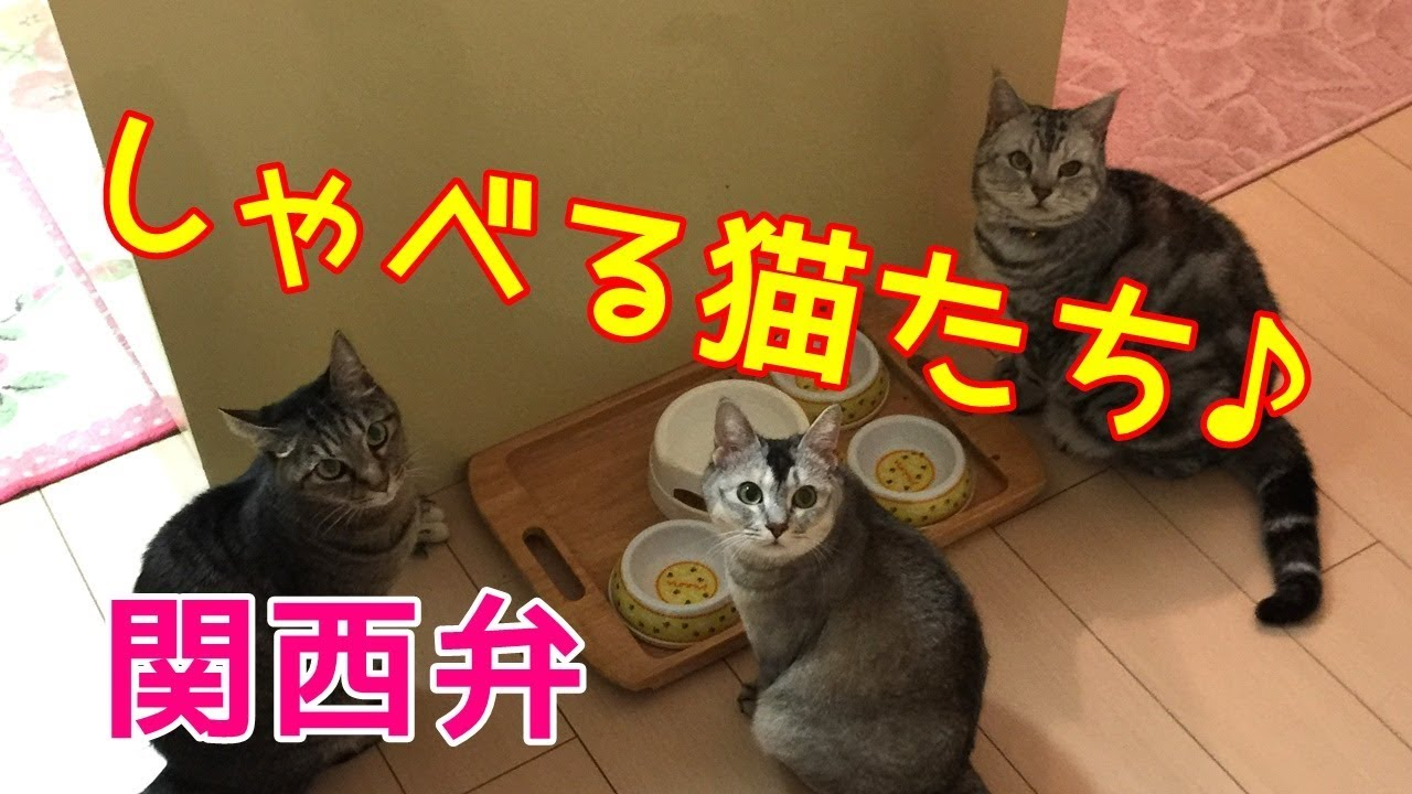 弁 関西 しゃべる 猫