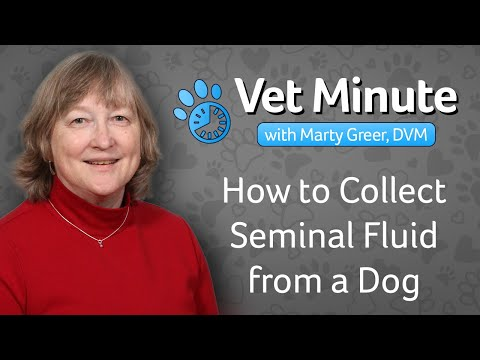 DIY, Shipping Dog Semen Any Where Around the World from YouTube · Duration:  20 minutes 58 seconds
