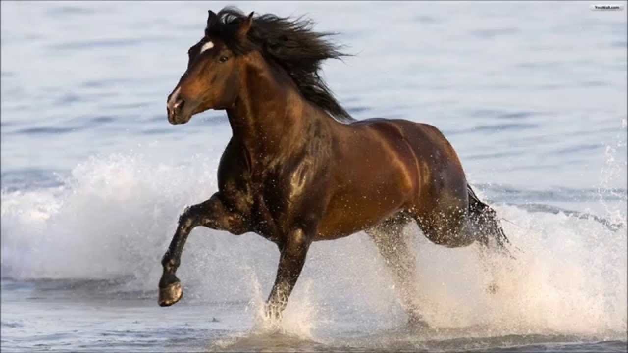 Amazing horses beautiful horse full hd youtube voltagebd Images