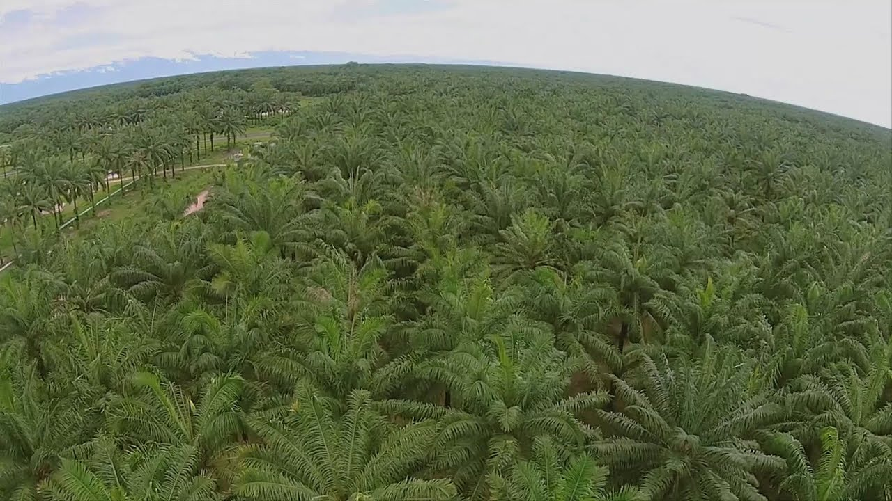 Cultivo de Palma de Aceite- Good Practices in Palm Oil Production ...