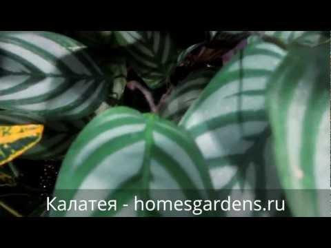 Вредители груши и борьба с ними фото садовых вредителей