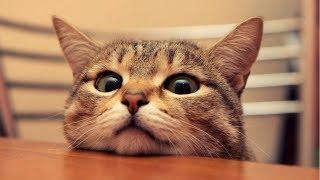 Srandovné videá 2018│TOP sranda│Vtipne, smiešne, zábavné videa zvierata, psy, mačky, deti, ľudia #6