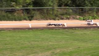 CGRC European Greyhound And Whippet Derby 2015 Final Lähtö 4