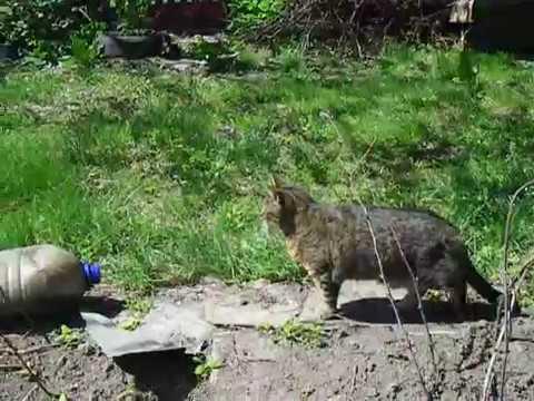 Вопрос: Что можно предпринять, чтобы чужие коты не гадили на огородных грядках?