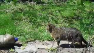 Рассада на грядках Защита от кошек и собак