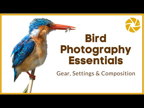 Bird Photography Essentials | Gear, Settings and Composition Tips to improve your images.