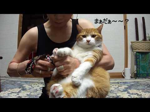 会話成り立つ爪切り。A  cat conversation ,relay from the spot