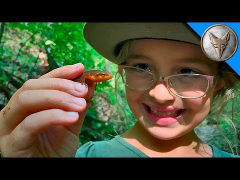 Thumbnail: Searching for Newts and Salamanders