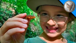 Searching for Newts and Salamanders thumbnail