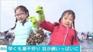 千葉県富津市では、潮干狩り場がオープンしました。 富津市の海岸では、...