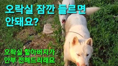 SB150 대장님! 오락실 할아버지 인사만 하고 올께요 (놀다갈까? 말까?) 먼져가세요 ㅋㅋㅋ korean  dog