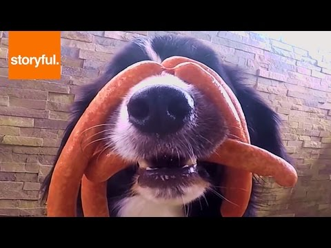 Dog Covered In Sausage Links Resists Temptation To Eat (Storyful, Dogs)