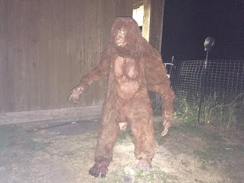 Bigfoot Shot in 1953 by Mike Caine and Morty Lucas
