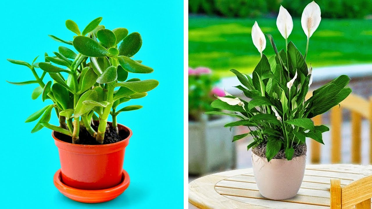 These NASA Approved Super Plants Cleanse The Air And Bring The Health To Your House