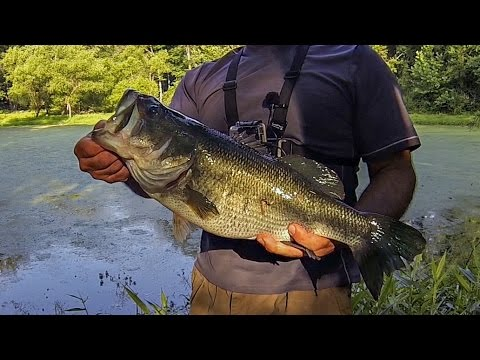Super secret scum pond bass fishing topwater frog for Bass fishing in ponds