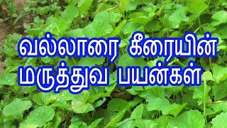 Benefits of Vallarai Keerai in Tamil | To Increase Memory Power | Healthy Life - Tamil.