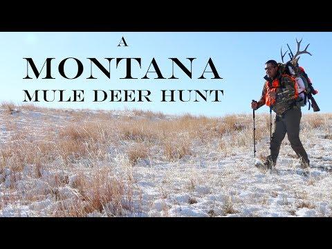 A Montana Mule Deer Hunt