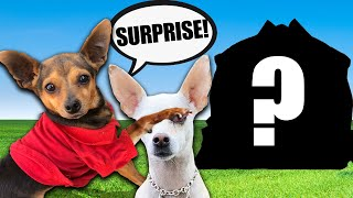 Surprising Our Crush with Her Dream Dog House! PawZam Dogs