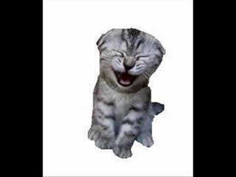 Laughing Meme Cats
