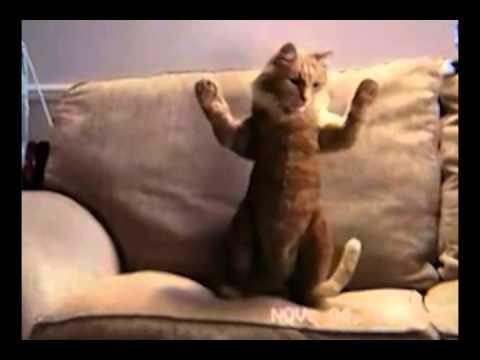 SHLEU SHLEU 'Dancing Cats' - New- Tony, Edouard, Peddy, Renan, Franky ...