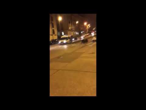 Dos jabalíes son arrinconados en la Avenida Magoi de Lugo