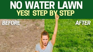 NO Water Lawn -Grow a  Beautiful Lawn with NO sprinklers, hoses or watering! See the RESULT