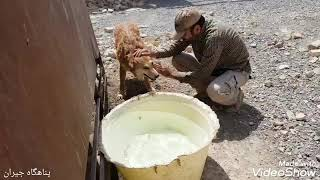 we bring water from kilometers away for dogs in the shelter.