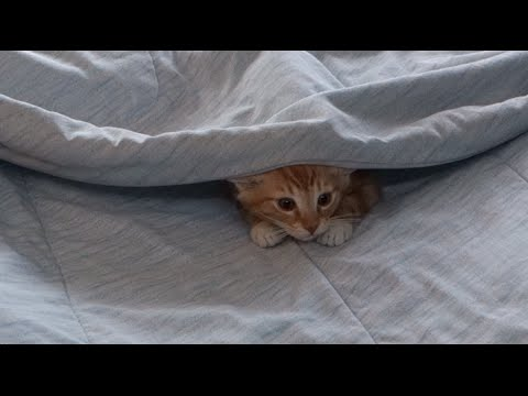 CUTEST KITTENS Playing Hide and Seek