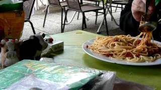 Sparrow piked spaghetti from the plate - frecher Spatz klaut Spaghetti