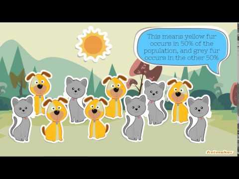 LS1 Genetic Drift Animation