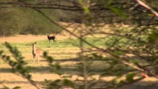 51 Acre Farm w/1800's Colonial Home - Talladega, Alabama - Alabama Land For Sale
