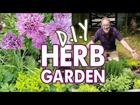 DIY Easy Herb Garden for Beginners 🌱 🌱 🌱