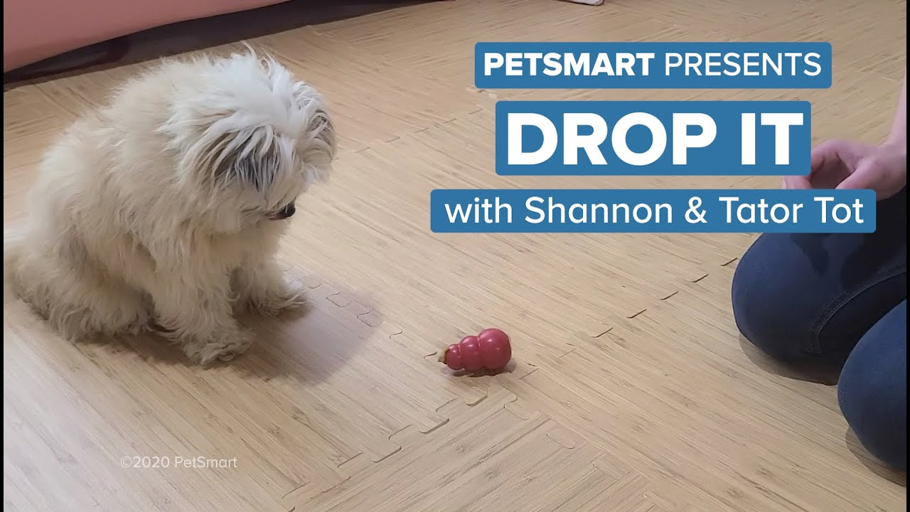 Petsmart Reviews In Phoenix Az Glassdoor