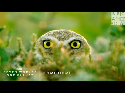 Come Home | Seven Worlds, One Planet | Saturday at 9pm | BBC America