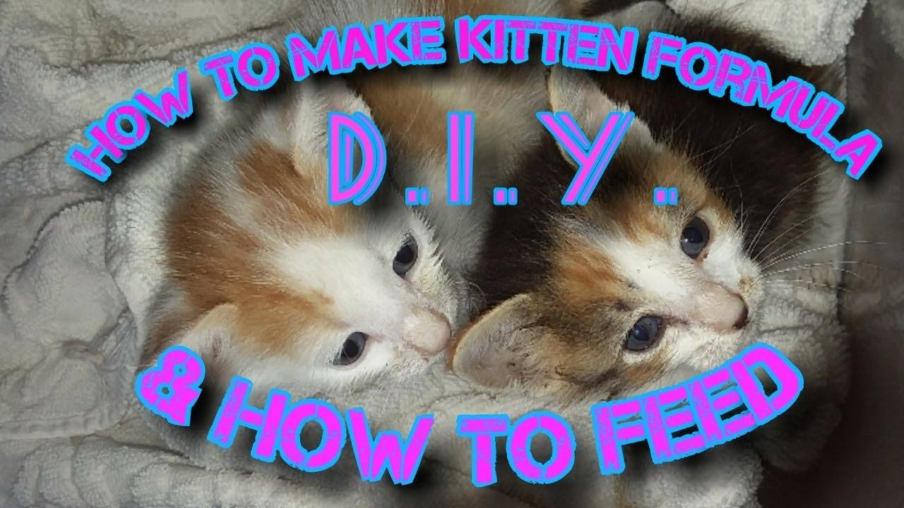 Homemade Kitten Formula Homemade Ftempo