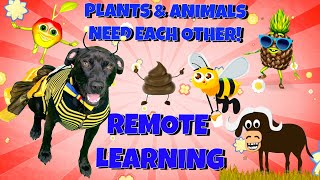 Plants and animals need each other to survive. in this educational children's video, kids learn all about how depend on for su...