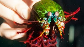 😻 10 animals with superpowers 🐛🐳🦕