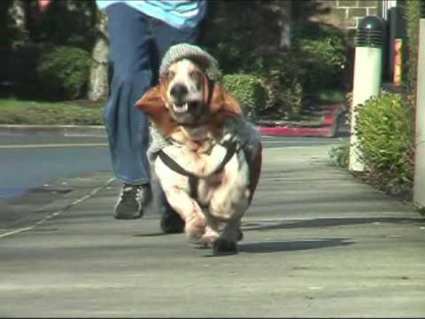 basset hound dressed as sherlock holmes running in slow motion