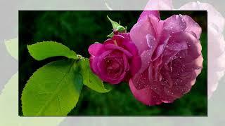 Красивые фотографии природы и цветов