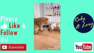 Cute Cat Play And Look Each Other Funny Kitten Video