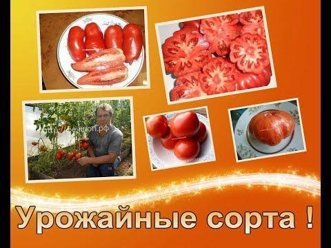 🍅Лучшие сорта томатов, самые урожайные помидоры для теплиц, супер томаты для посадки в 2020 году