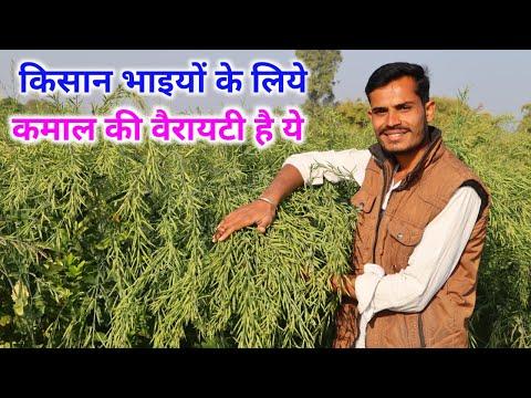 सरसों की उन्नत खेती कैसे करें? सरसों की उन्नत क़िस्म R.H.725 | How To Do Mustard Farming? 8224917065