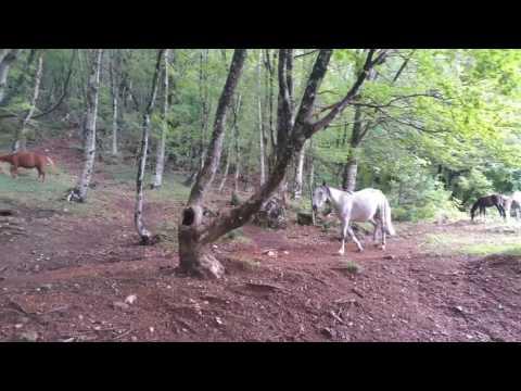 Paardjes op Mt Dajt.