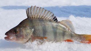 Зимняя рыбалка 2017 Окунь зимой на безмотылку