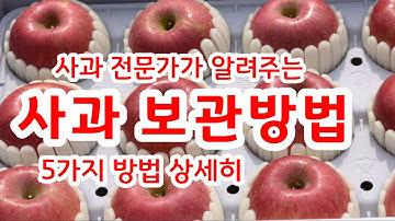 사과 보관방법 5가지 사과 저장방법